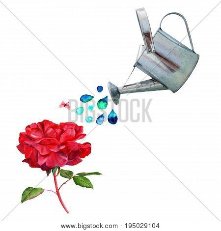 A watering can pouring water over a vintage style red rose, with a little pink butterfly, and a place for text, on white background