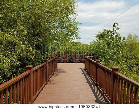 dark wood boardwalk and many trees and plants