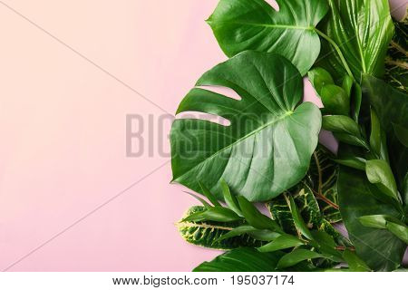 Beautiful composition with variety of exotic fresh  plants on pink background, top view