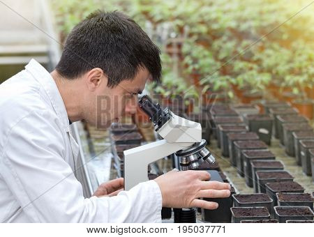 Scientist With Microscope In Green House