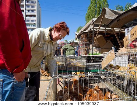Voronezh, Russia - May 13, 2017: A woman chooses poultry on the market