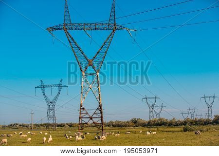 Power pylons and high voltage lines in an agricultural landscape with sheeps in Bulgaria.