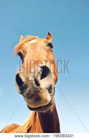 Closeup portrait of a brown horse against the sky