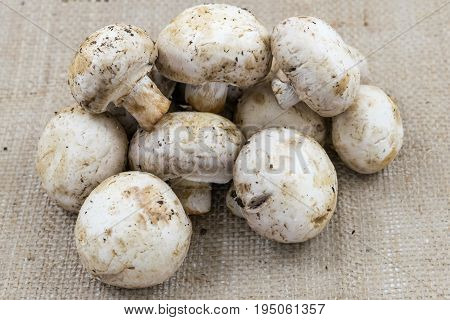 Local white button mushrooms freshly harvested from a farm in Virginia