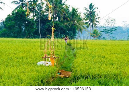 Balinese Woman In Traditional Costume Fulfill Religious Ceremonies And Offerings To The Gods