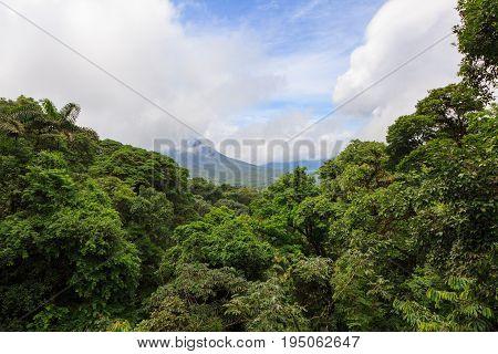 Lush rainforest canopy view at La Fortuna Costa Rica