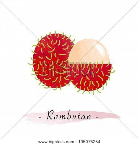 Colorful Watercolor Texture Vector Healthy Fruit Rambutan