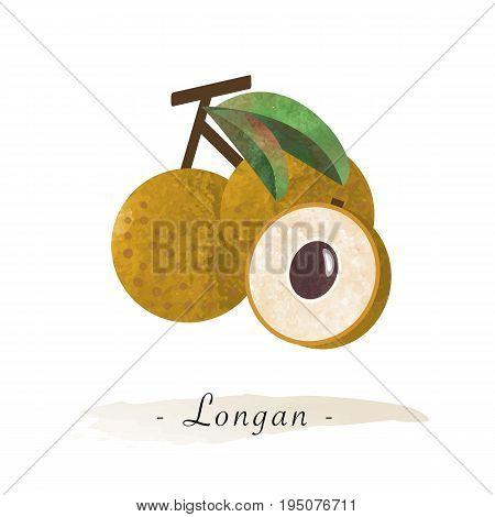 Colorful Watercolor Texture Vector Healthy Fruit Longan