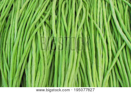 Yard long bean Healthy vegetables. material raw for cooking. textured background. Scientific nameVigna unguiculata subsp. sesquipedalis.