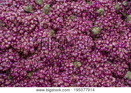 Shallot Healthy vegetables herb. material raw for cooking. texture background. Scientific name Allium ascalonicum.