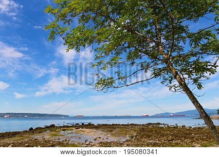 Tree on a beach during low tide against blue sky with clouds. Sea landscape with ships in the roadstead in Vancouver Canada.