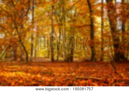 Abstract blurred background from autumn forest