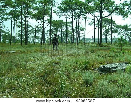 Pine forests on high mountain in Thailand. Thailand have a lot of tropical forests. A few areas that have pine forest