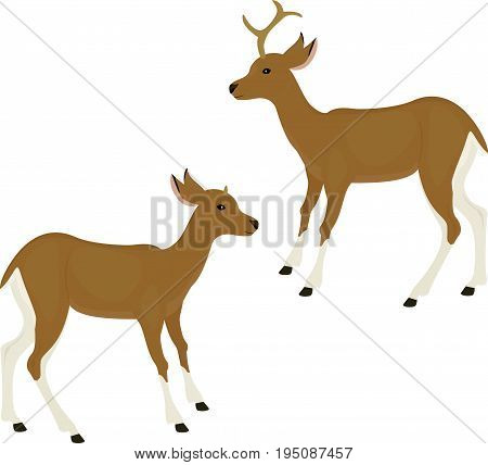 Cute deer icon isolated on white background. Cartoon fawn. Vector illustration.