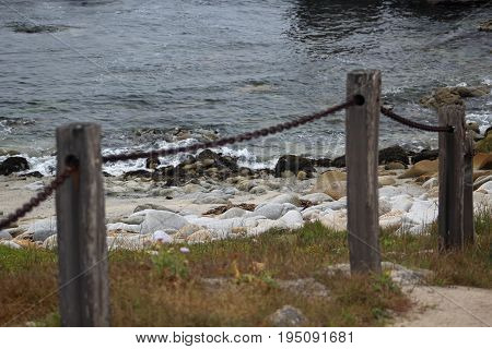 Up close view of a barrier made of wooden posts connected by a chain along a walkway at Asilomar State Beach in Pacific Grove, California surrounded by low native plants and, in the background, the blue gray ocean with small waves of white foam crashing a