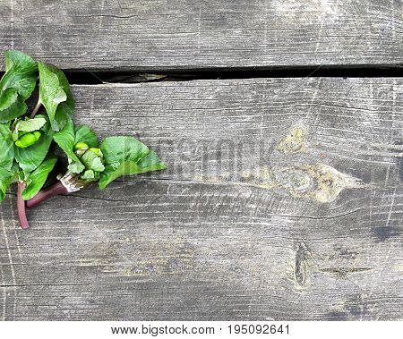 Green spring leaves on a wooden background with space for your text.