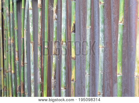Bamboo Fence,vintage bamboo fence background,bamboo art home