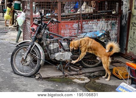 Dog Playing At The Slum In Manila, Philippines