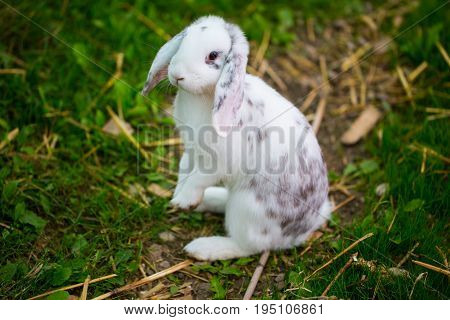 Rabbit standing in the grass, fluffy, little bunny