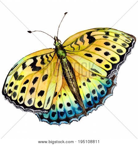 Exotic butterfly wild insect in a watercolor style isolated. Full name of the insect: butterfly. Aquarelle wild insect for background, texture, wrapper pattern or tattoo.