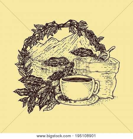 Coffee beans tree branch freehand pencil drawing vector illustration. Cafe or restaurant menu design coffee element.