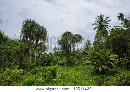 Jungle Forest. Tropical Trees In Asia. Beautiful Adventure Nature Landscape Background With Hike Roa