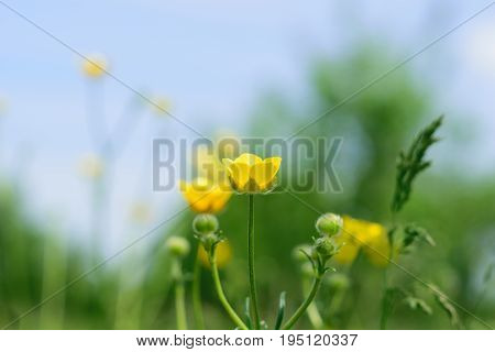 blurry photo pf yellow flowers on green background
