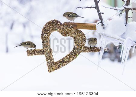 Winter season bird feeder & creativity birds concept