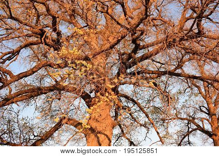 Many branches of the tree expand through the blue sky