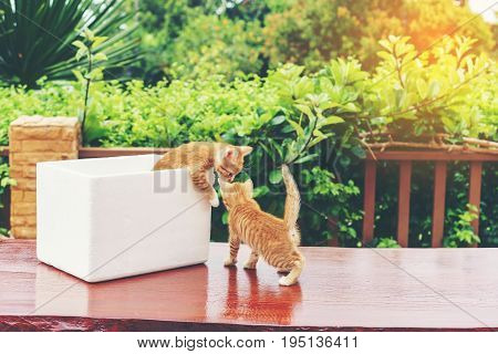 Cute little naughty yellow Domestic kittens playing with foam container on wood table