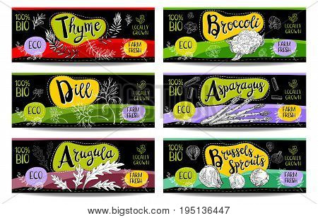 Set of colorful labels sketch style food spices black horizontal. Asparagus brussels sprouts broccoli thyme arugula dill. Vegetables farm fresh locally grown product Hand drawn vector illustration