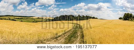 Panoramic Shot Of Summer Countryside With Dirt Road Between Fields