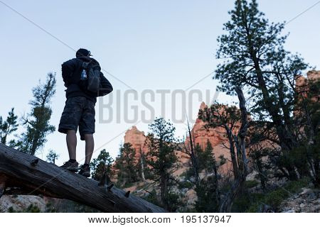 Hiker standing on the dead wood at rocky terrain of Bryce Canyon. USA