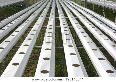 Layout for Hydroponics Vegetable Tray. Hydroponics farm.
