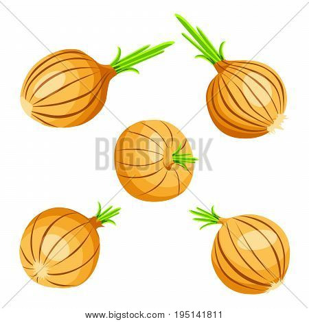 Collection of yellow onions with fresh green sprout. Isolated on white background. Vegetable from the garden. Organic food. Salad ingredient. Healthy vegetable.