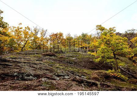 Undulating Landscape With Trees And Bushes At The Autumn Season