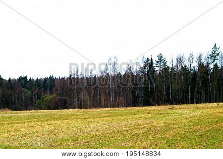on the site of an abandoned village in the spring in Russia, Kaluga oblast