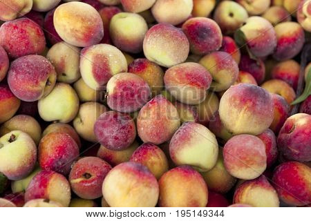Juicy sweet Sicilian peaches,large plan in the farm shop