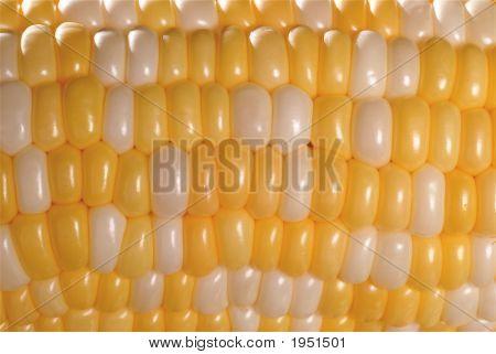 Dsc_0175-Macro Corn Kernels