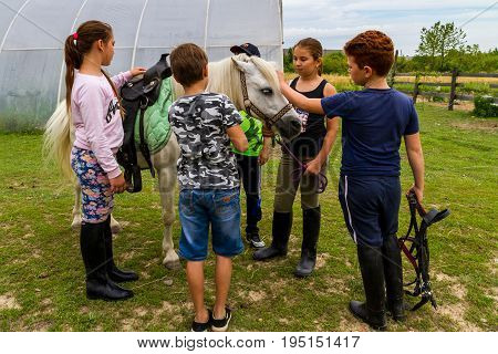 Vynohradiv Ukraine - July 12 2017: Children equip a white pony before a riding lesson during a vacation at a summer equestrian sports camp.