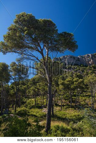 Rock formation and pine trees above the town of Estartit on the Costa Brava