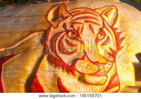 CHADDS FORD, PA - OCTOBER 26: View of Tiger Pumpkin at The Great Pumpkin Carve carving contest on October 26, 2013