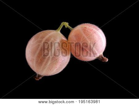 Macro photo of light pink and fresh gooseberries on a black background. Close-up macro pink gooseberries. Pink ripe juicy berries on the black background. Sweet summer berries.