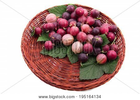 A dark brown wooden basket with multi-colored gooseberries and green leaves, isolated on a white background. Colorful red and pink berries full of nutritious vitamins. Close-up ripe fresh red berries.