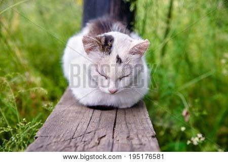 A homeless cat is dozing on a wooden bench