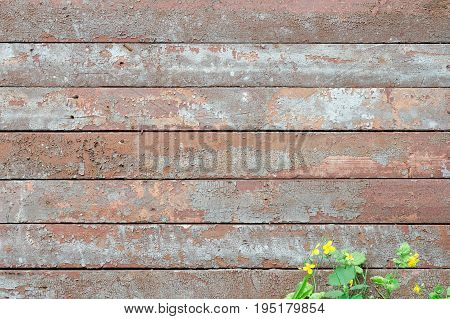 Horizontal Vintage Boards Red-gray Hue, Flowers Celandine At The Bottom Of The Frame