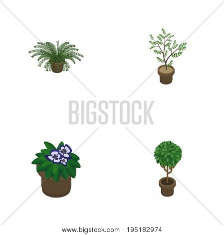 Isometric Flower Set Of Plant, Tree, Fern And Other Vector Objects. Also Includes Houseplant, Flowerpot, Fern Elements.