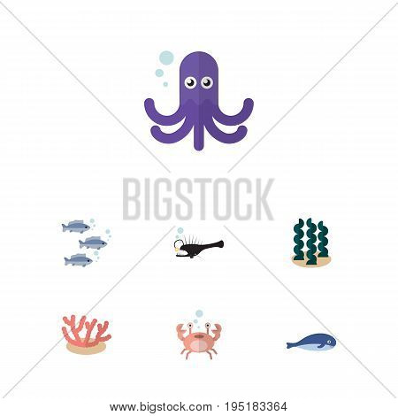 Flat Icon Sea Set Of Algae, Tentacle, Cancer And Other Vector Objects. Also Includes Squid, Octopus, Algae Elements.