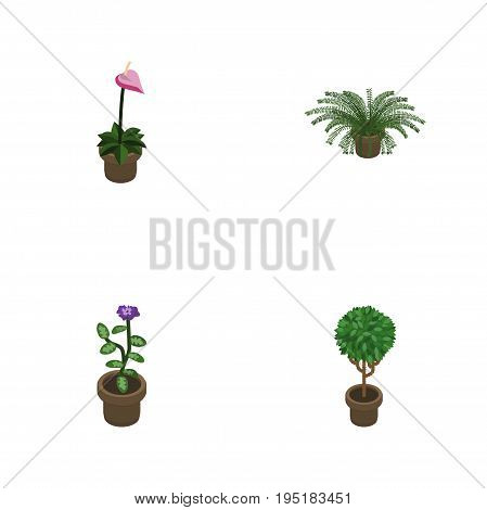 Isometric Houseplant Set Of Plant, Flower, Grower And Other Vector Objects. Also Includes Pot, Plant, Flower Elements.