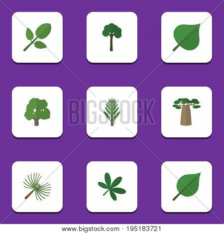 Flat Icon Nature Set Of Rosemary, Evergreen, Maple And Other Vector Objects. Also Includes Baobab, Wood, Willow Elements.